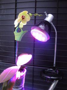 Lámpara orquídea encendido