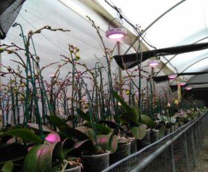 Lámparas orquídeas con plantas invernadero