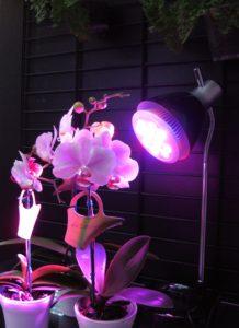 orquídeas con luz