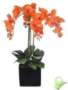 orquidea-naranja