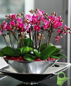 orquideas-conjunto-copia
