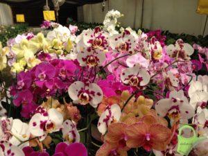 orquideas-primavera