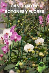 cantidad-de-botones-y-flores