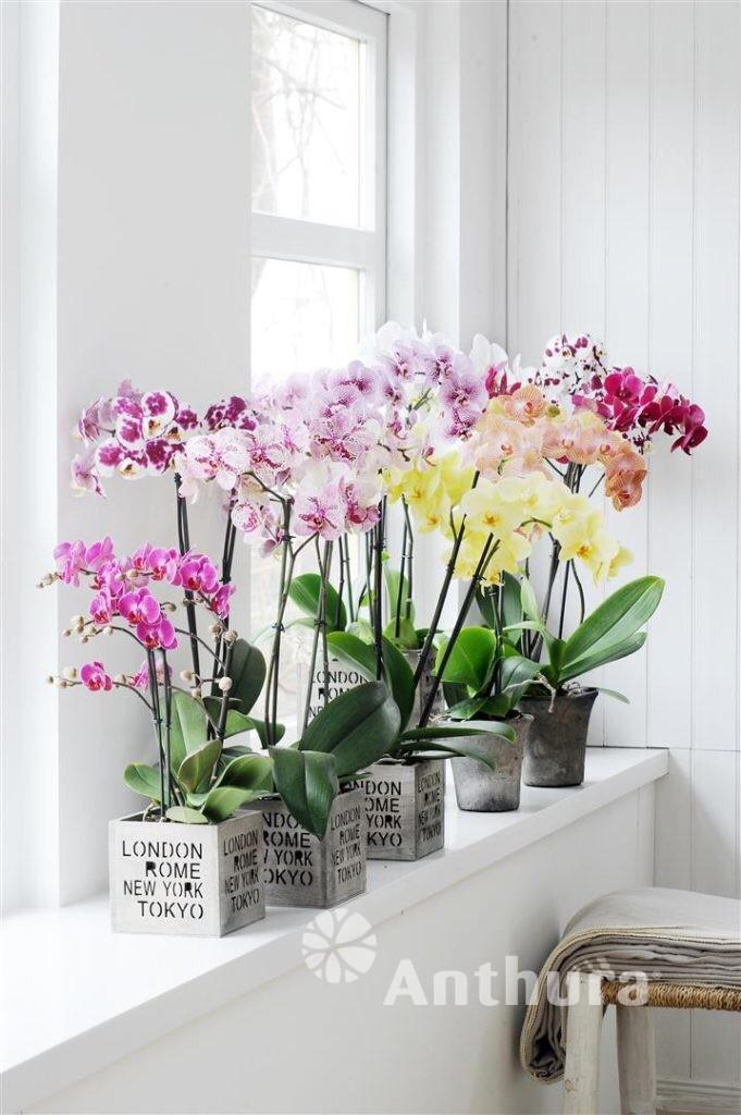 CUIDADO!!! Corriente de aire puede marchitar las flores